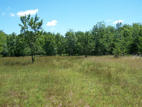 166 Acres Dickey Loop : Bedias : Walker County : Texas