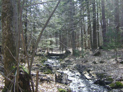 5 Acres Amboy Ny Near Oneida Lake : Amboy : Oswego County : New York