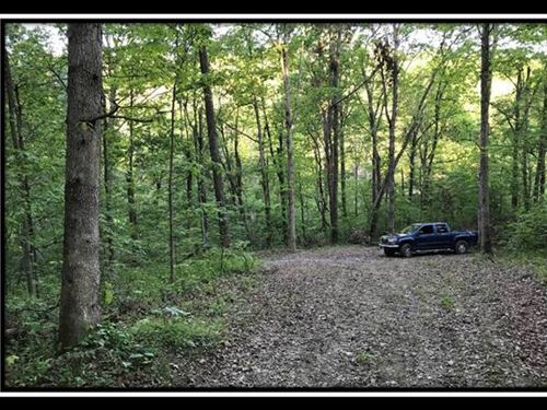 10 Acres Mature Open Canopy Woods : South Webster : Scioto County : Ohio