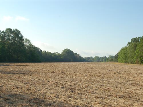 140 Acres In Eufaula, Alabama : Eufaula : Barbour County : Alabama