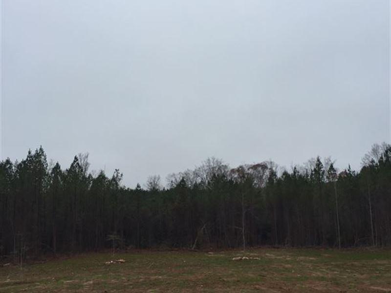 16+/- Acre Mini-Farm : Land for Sale : Lafayette : Chambers County : Alabama