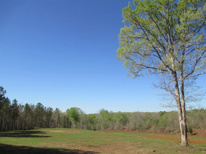 Nice Country Setting On 60+/- Acres : Land for Sale : Lafayette : Chambers  County : Alabama