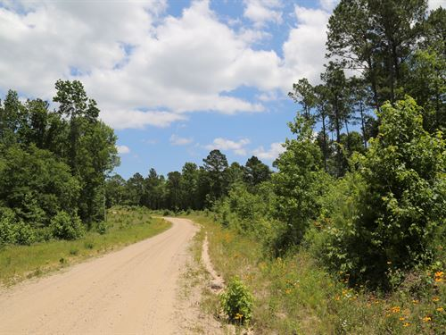 20.3 Ac Felix Currie Road : Pointblank : San Jacinto County : Texas