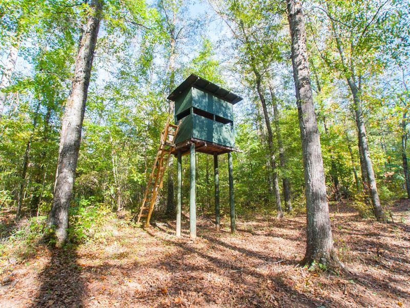 Beautiful 200+/- Ac Timber Mix : Waverly : Chambers County : Alabama