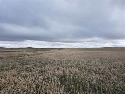 Cheyenne County Crp & Pasture : Potter : Cheyenne County : Nebraska