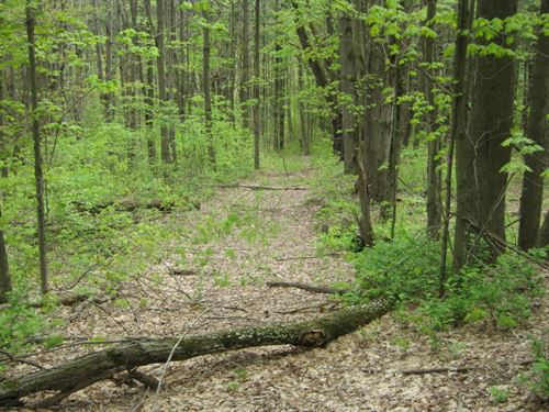 34 Acres Near Elmira : Van Etten : Chemung County : New York