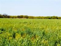 Great Cropland With Hunting : Nardin : Grant County : Oklahoma
