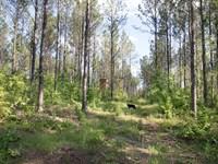 Big Residential Lot No. 7 : Verbena : Chilton County : Alabama