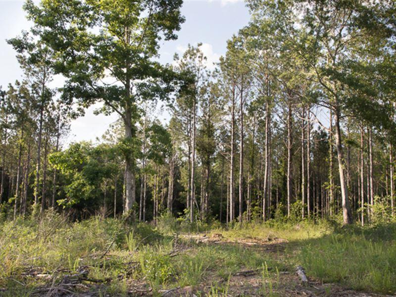 Big Residential Lot No. 8 : Verbena : Chilton County : Alabama