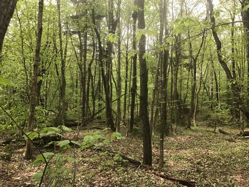North Country Hunters Special : Boylston : Oswego County : New York
