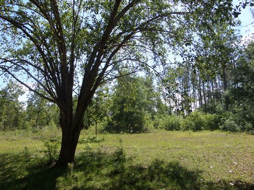 Homesite On Mill Creek Lane : Jesup : Wayne County : Georgia