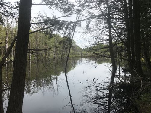 Borders Little John State Forest : Boylston : Oswego County : New York