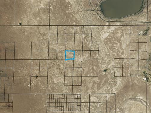 40 Acres In Alamosa, co : Alamosa : Colorado