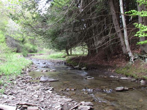 21 Acres Bordering State Land : Solon : Cortland County : New York
