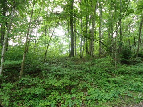 8.40 Acres Wooded In Clay Co. : Celina : Clay County : Tennessee