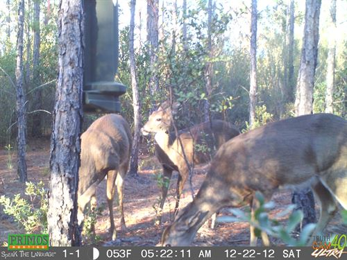 45.32 Acres Loaded With Game : Perry : Taylor County : Florida