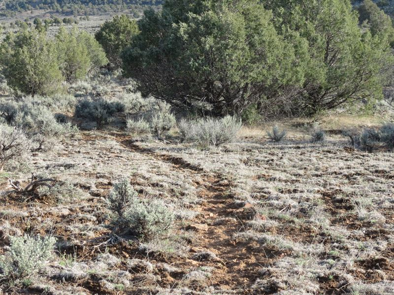 Pinon Hills Ranch - Lot 5 : Pagosa Springs : Archuleta County : Colorado