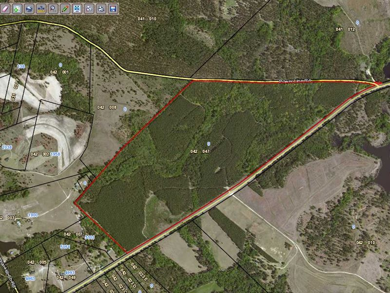 Great Timber Tract : Wrightsville : Laurens County : Georgia