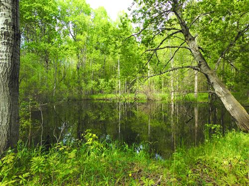 40 Huntable Acres : Moorestown : Missaukee County : Michigan