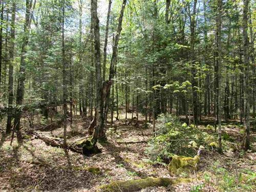 10 Acres E Petticoat Lk Rd 1101700 : Michigamme : Baraga County : Michigan