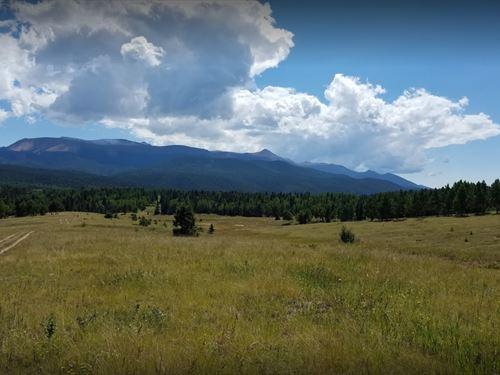 .56 Acres In Florissant, CO : Florissant : Teller County : Colorado