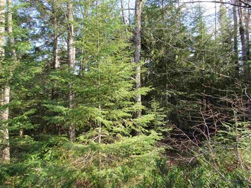 10 Acres Murphy Rd 1101803 : Covington : Baraga County : Michigan