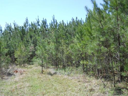 43.6 Acres Near Ms State University : Starkville : Oktibbeha County : Mississippi