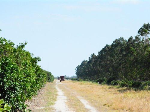 Becker Road Grove & Acreage : Vero Beach : Indian River County : Florida