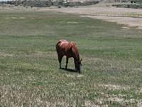 Colorado Horse Lover's Dream : Colorado City : Pueblo County : Colorado