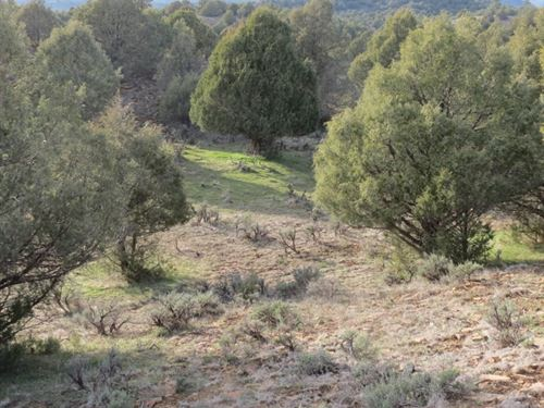 Pinon Hills Ranch - Lot : Pagosa Springs : Archuleta County : Colorado