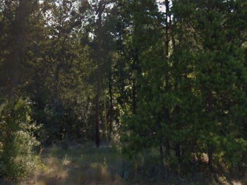 Tyler County, Tx $8,000 Neg : Woodville : Tyler County : Texas