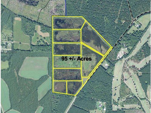 Youmans Tract - Duck Ponds : Furman : Hampton County : South Carolina