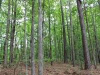 Well Managed Timber : Talbotton : Talbot County : Georgia