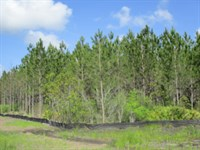 102 Acre Timberland Investment : Waycross : Ware County : Georgia