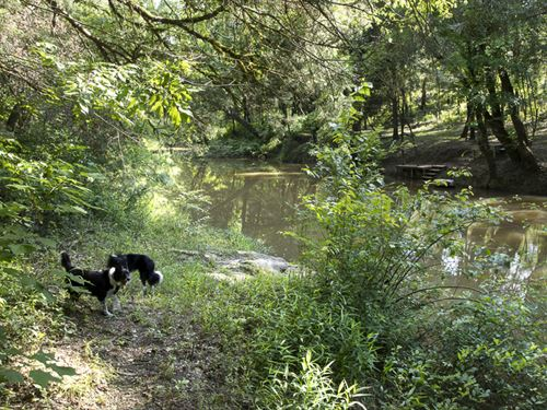 Historic Mahan Creek Homesite : Brierfield : Bibb County : Alabama