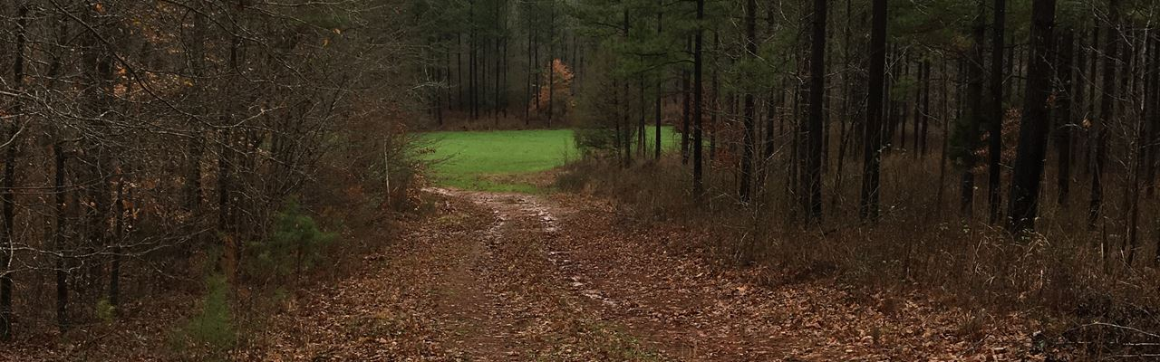 Acreage For Outdoor Enthusiast