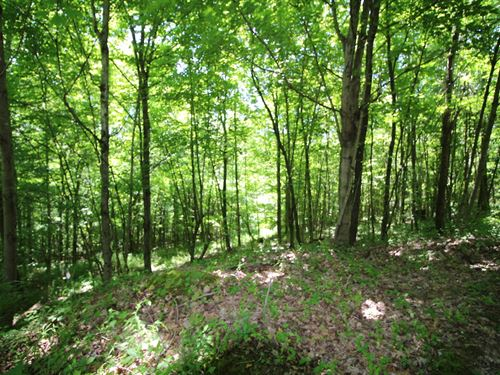 Arion Rd - 65 Acres : McDermott : Scioto County : Ohio