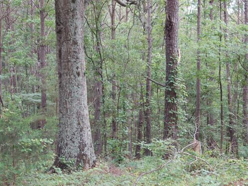 Awesome 60 Acre Tract : Letohatchee : Montgomery County : Alabama