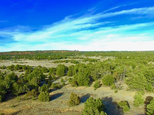 Wooded Homesite With Road Frontage : Ramah : Cibola County : New Mexico