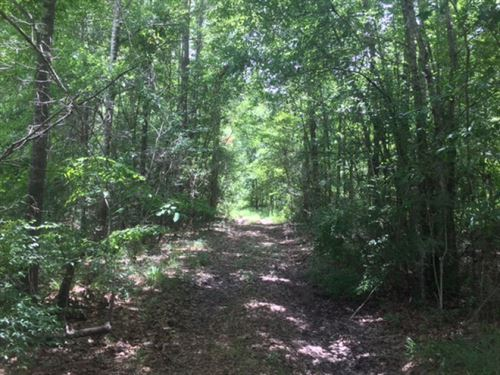 Hunting Land For Sale Marion County : Columbia : Marion County : Mississippi