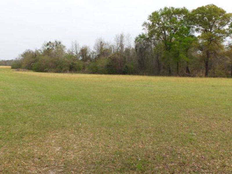Tract For Hunting Or Homesite : Rentz : Laurens County : Georgia