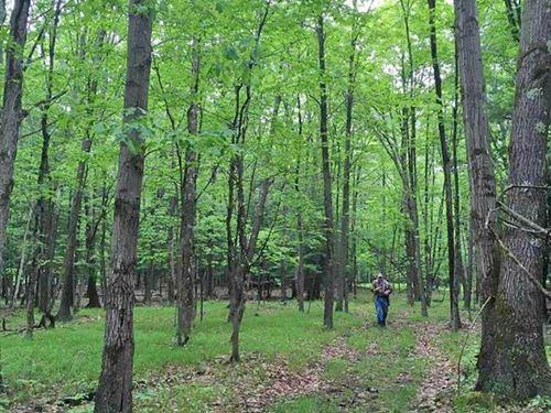 Hudson Valley Land Bargain : Hannacroix : Greene County : New York