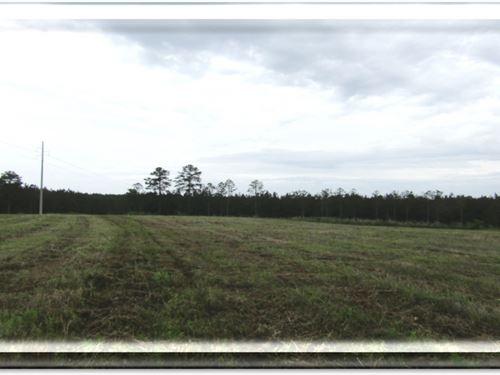 35 Acres In Wayne County : Waynesboro : Wayne County : Mississippi