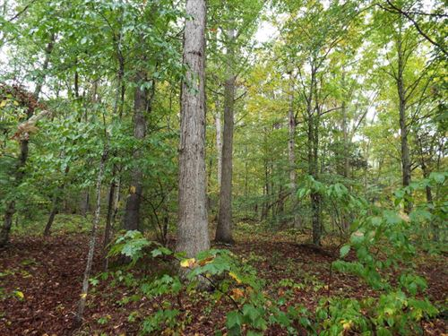 Wooded Acreage Outside Of Vonore : Vonore : Monroe County : Tennessee