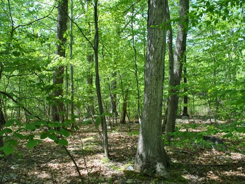 102 Acres Timberland Pine Bush Ny : Pine Bush : Ulster County : New York