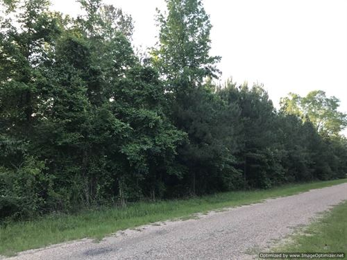 100+/- Ac Home Site Or Hunting : Brookhaven : Lincoln County : Mississippi