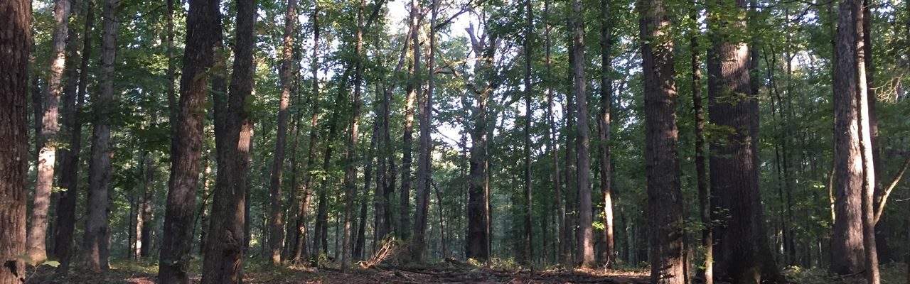 Beautiful Creek Pasture & Hardwoods : Madison : Morgan County : Georgia