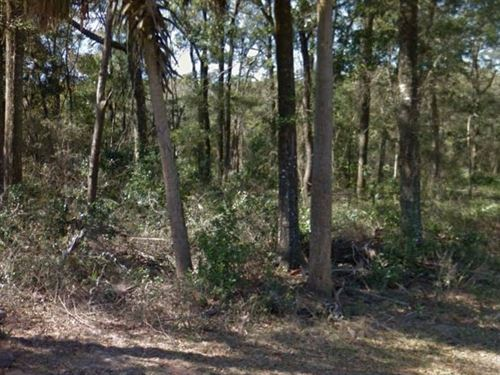 Gilchrist County, Fl $100,999 Neg : Fanning Springs : Gilchrist County : Florida