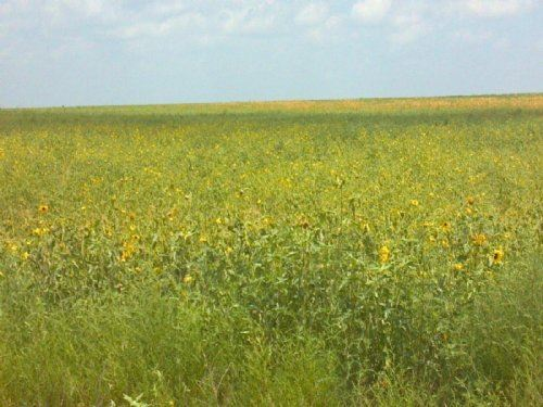 517 Acre Crp Farm High Return : Boone : Pueblo County : Colorado