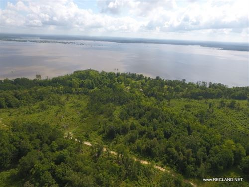 156 Ac - Timberland Adjoining Lake : Woodville : Tyler County : Texas